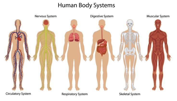 General science bullet systems of the human body capsule 5 general knowledge and current affairs are an important component of many competitive exams such as the upsc civil services examination ssc cgl exam ccuart Images
